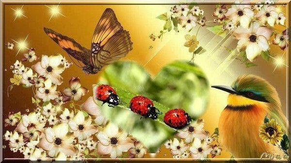 papillon et coccinelles