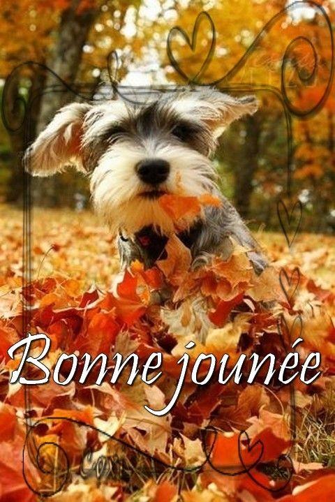 Bonjour, bonsoir..... - Page 22 529ef860