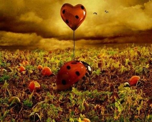 Ballons coeurs dans ciel
